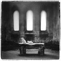 Keith Carter: San Galgano, 1998