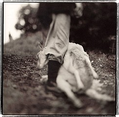 Keith Carter: Sleep Shearing