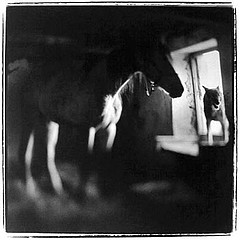 Keith Carter: Horse and Wolf, 1997