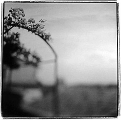Keith Carter: Rose Arbor, 1998