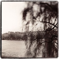 Keith Carter: Oldest Tree In Paris, 1999