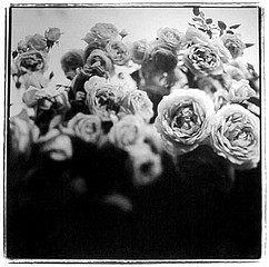 Keith Carter: Cordes Roses, 1998