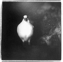 Keith Carter: Portrait of a Bird, 1998