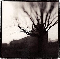 Keith Carter: Tulleries, 1999