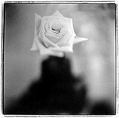 Keith Carter: Ink Bottle Rose 1, 1999