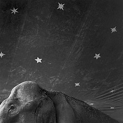 Keith Carter: Elephant and Stars, 2001