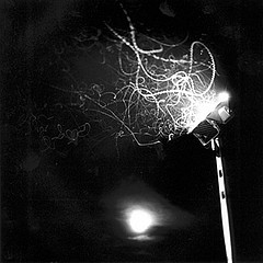 Keith Carter: Light Trails, 2001