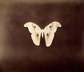 Keith Carter: Giant Moth