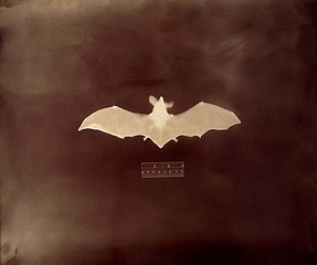 Keith Carter: Bat