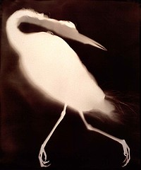 Keith Carter: Blue Heron