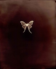 Keith Carter: Luna Moth