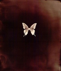 Keith Carter: Swallowtail