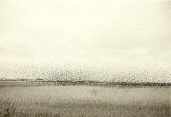 Kevin O'Connell: Flight of Birds #3  (SOLD OUT), 2001