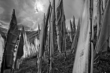 Larry Louie: B/W Prayer Flags 1
