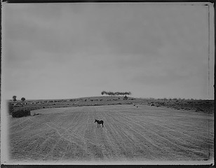 Mark Klett: Donkey Grazing Road to Miranda, 7/95, 1995