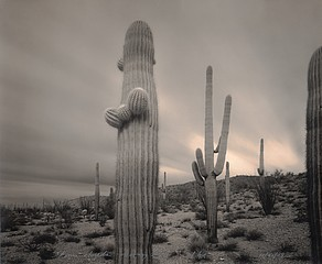 Mark Klett: 1 Hour Storm Saguaros