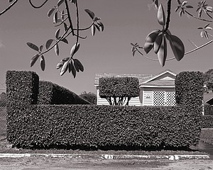 Mark Surloff: Hedges and Leaves