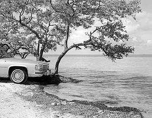 Mark Surloff: Cadillac and Tree