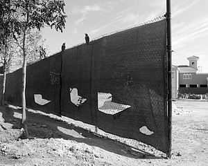 Mark Surloff: Fence and Birds, 1981