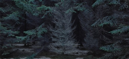 Michael Lange: WALD | Landscapes of Memory #5420
