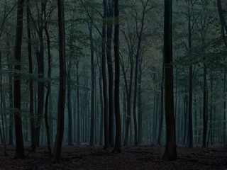 Michael Lange: WALD | Landscapes of Memory #0172