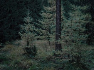 Michael Lange: WALD | Landscapes of Memory #2848