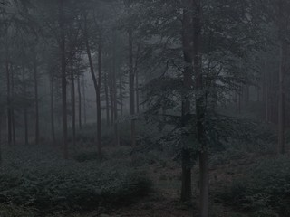 Michael Lange: WALD | Landscapes of Memory #4912