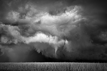Mitch Dobrowner: Funnel-Cornfield