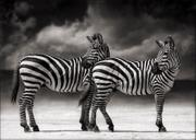 Nick Brandt: A Shadow Falls 2005-2006
