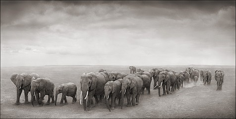 Nick Brandt: Elephant Journey to Water, Amboseli, 2008