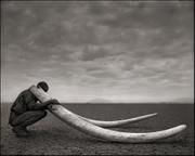 Nick Brandt: Across The Ravaged Land Pt.1: 2010-2011