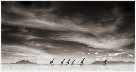 Nick Brandt: Giraffes Under Swirling Clouds, Amboseli, 2007
