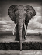 Nick Brandt: A Shadow Falls 2006-2007