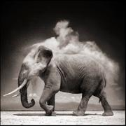 Nick Brandt: On This Earth 2000-2004 Vol. 2
