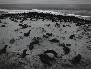 Pentti Sammallahti: Cape Cross, Skeleton Coast, Namibia, 2005