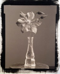 Photo Objects & Small Prints: James Pitts, Climatis Flower & Two Buds