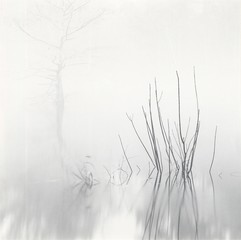 Photo Objects & Small Prints: David H. Gibson, Reeds with Cypress, Village Creek, Texas
