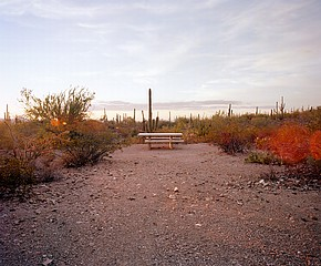 Ryann Ford: Saguaro National Park, Arizona