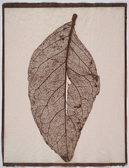 Susannah Hays: Skeletal Leaf (door), 1998