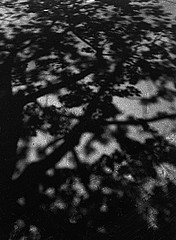 Susannah Hays: Summer Shadows
