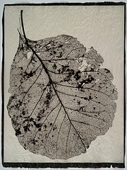 Susannah Hays: Skeletal Leaf (lace), 1998