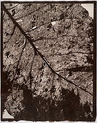 Susannah Hays: Forest Map, 1998