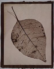 Susannah Hays: Skeletal Leaf (split), 1998