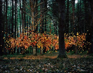 Thomas Jackson: Leaves no. 1, Napanoch, New York, 2011