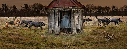 Tom Chambers: Blue Fox, 2009