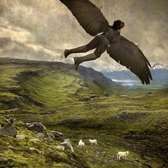 Tom Chambers: Winged Shepherd