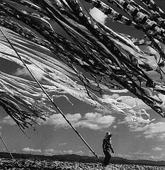 Werner Bischof: Silk Drying, Kyoto, 1951