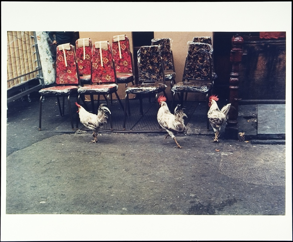 Helen Levitt: New York, NY, 1971 (Three Roosters) -- cover image of Slide Show