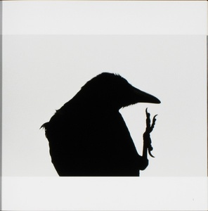 Masahisa Fukase: The Solitude of Ravens (Karasu)