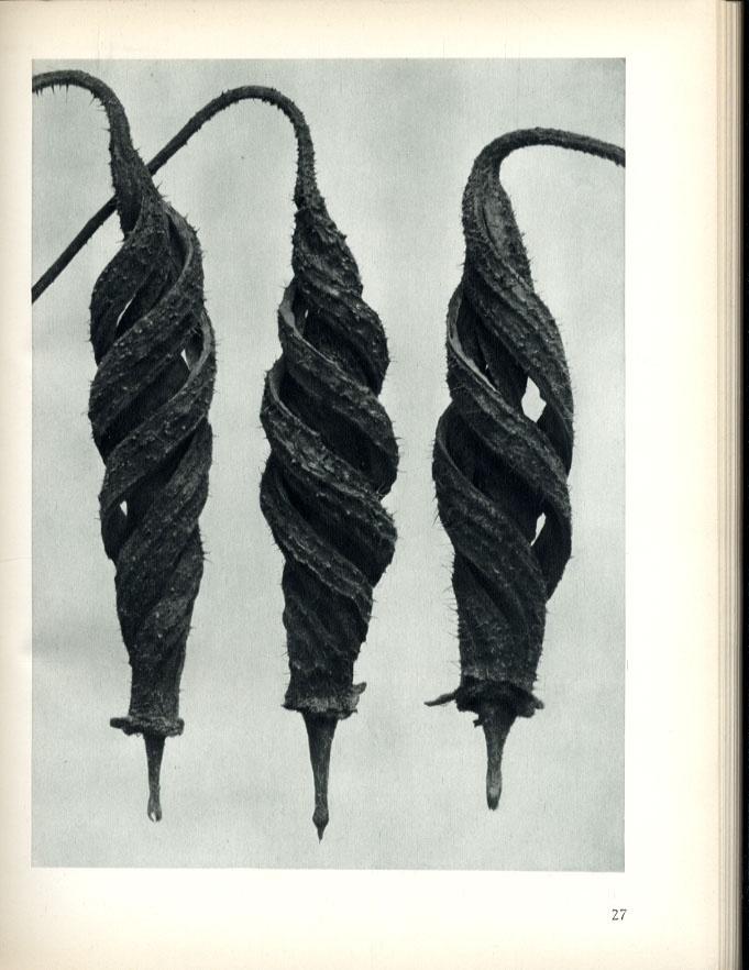 Karl Blossfeldt: Art Forms In Nature (First U.S. Edition)